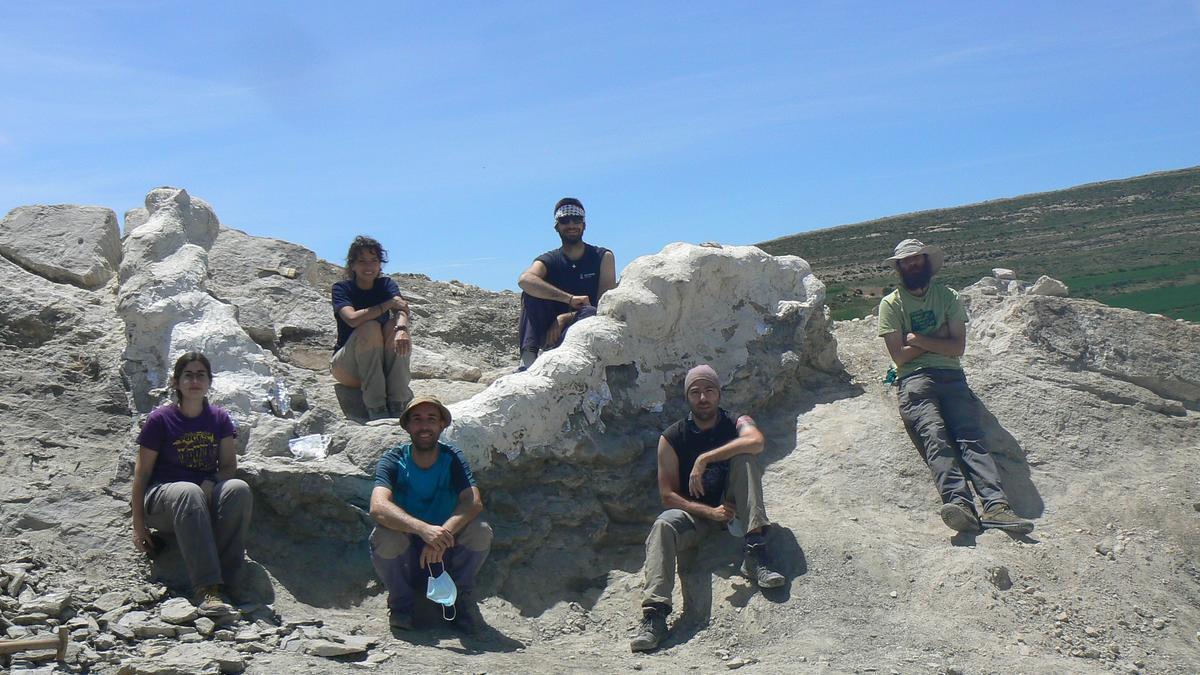 Paleontólogos tras la excavación de la serie vertebral articulada, una vez protegida con yeso.