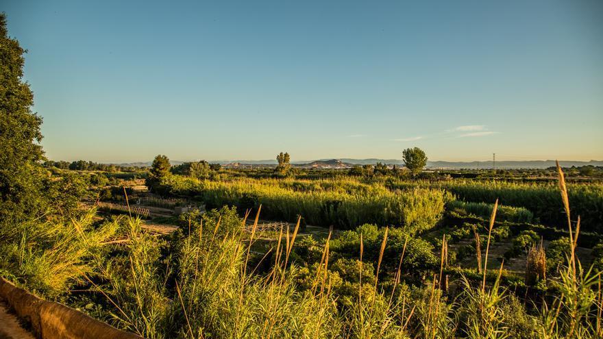 Riba-roja blinda los productos de su huerta bajo la marca del Parque Natural del Túria