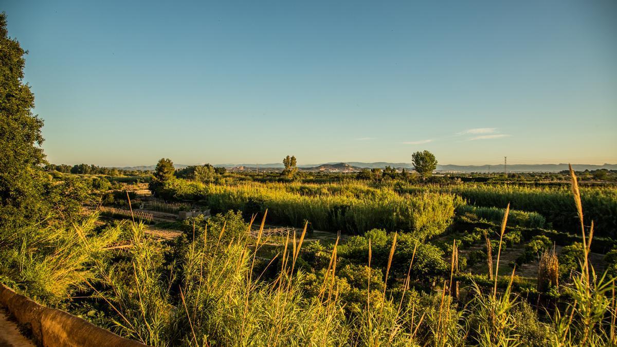 Riba-roja de Túria lanza una denominación de origen para los productos de su huerta