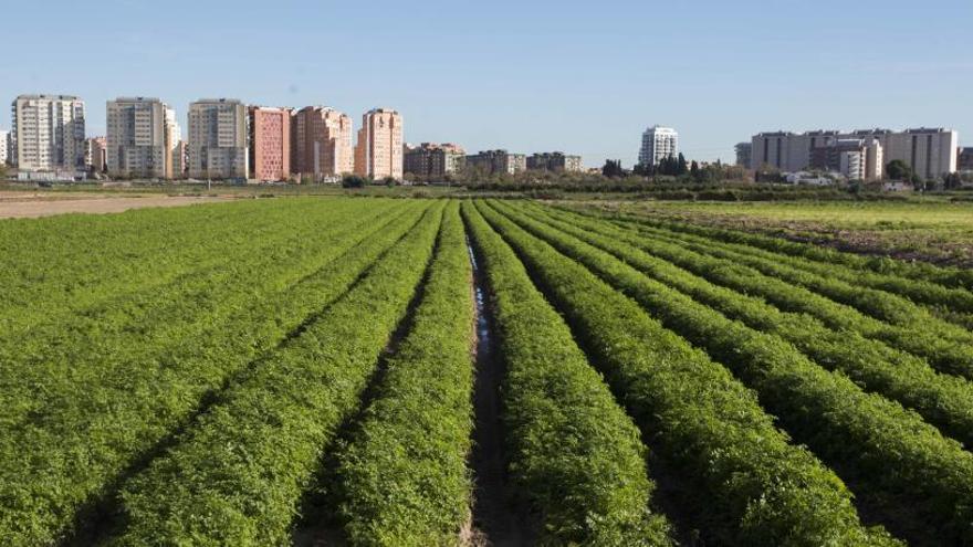 """Reanudan la tubería de Campanar """"sin informar"""" a los agricultores"""