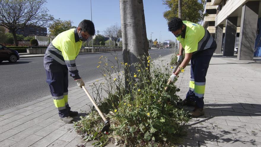 Comienza en Córdoba la limpieza de alcorques sin herbicidas cancerígenos