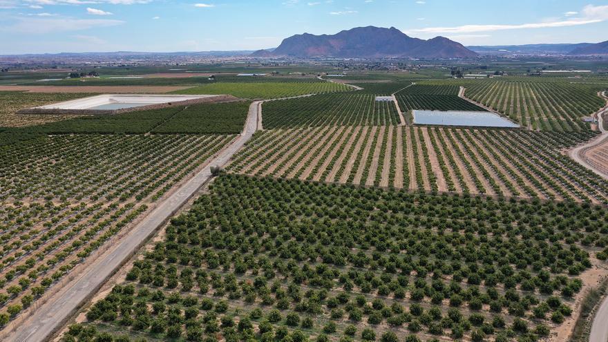 """Asaja Alicante pide a agricultores y regantes que """"saquen al PSOE del Gobierno si quieren evitar el final de la agricultura"""""""