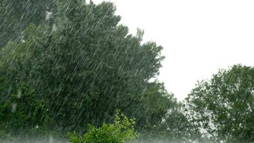 Pluges de novembre, omplen els barrals i curen tots els mals