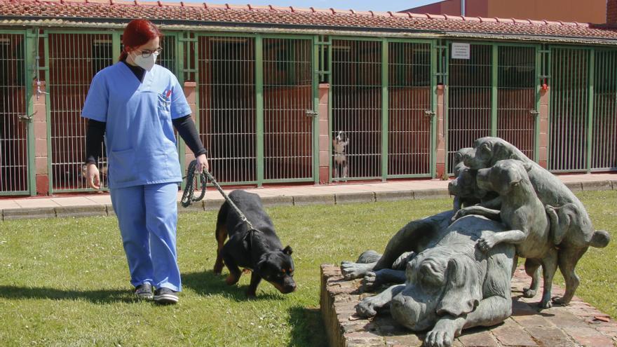 Hospital Veterinario Terán: la mejor atención y los cuidados más profesionales para los animales