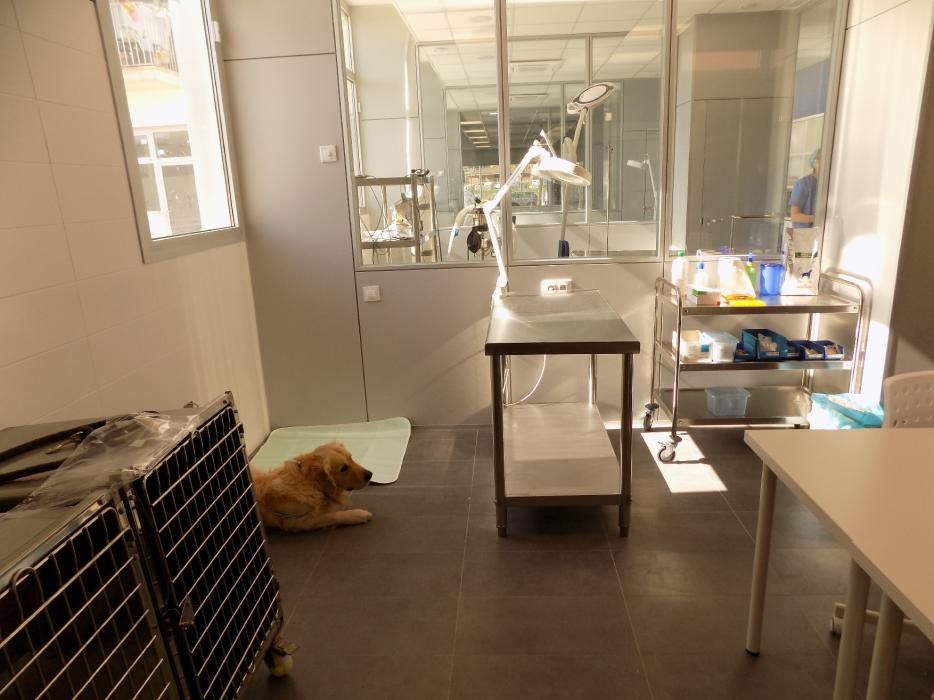 Nova clínica de Veter 7