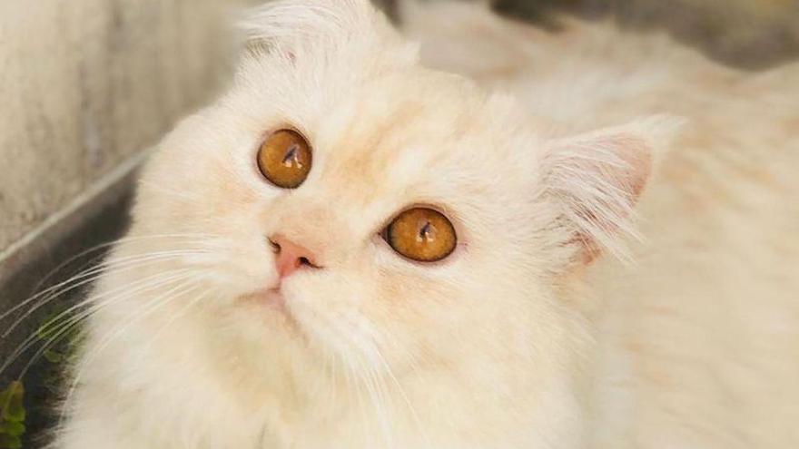 El albinegrismo se vuelca en la búsqueda del gato del presidente del CD Castellón