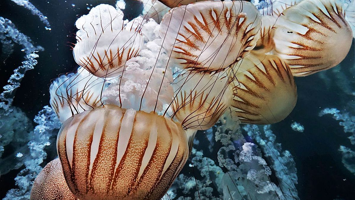 Tornen els cursos de l'Oceanogràfic  