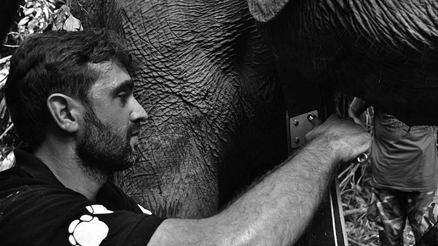Ahimsa Campos-Arceiz: «Los elefantes no son como los primates, dos veces  casi me matan»