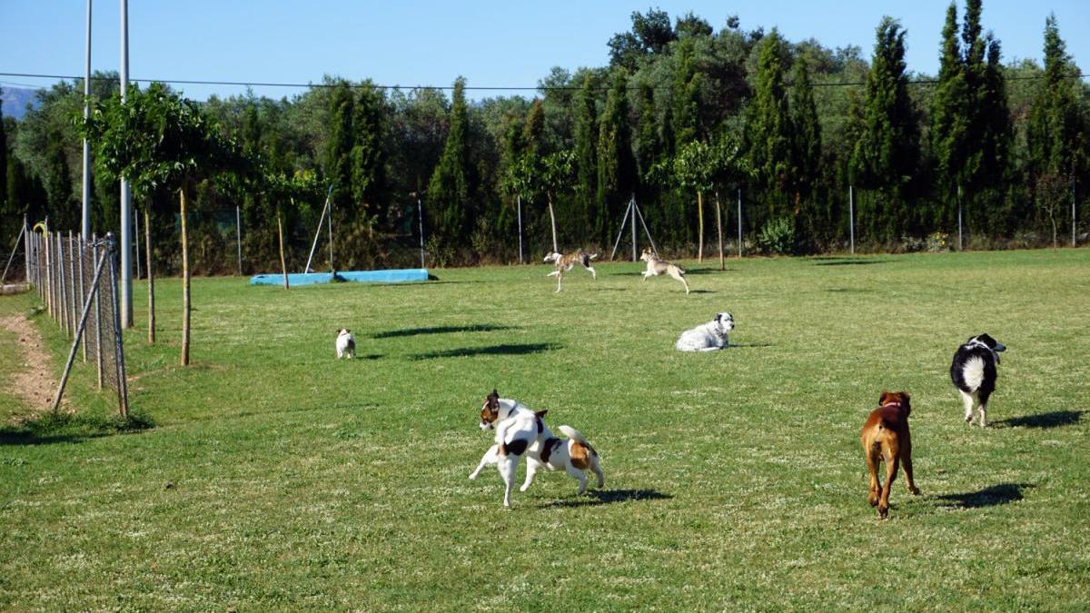 La residència canina està en un terreny de 12.000 metres quadrats, enmig de la naturalesa.