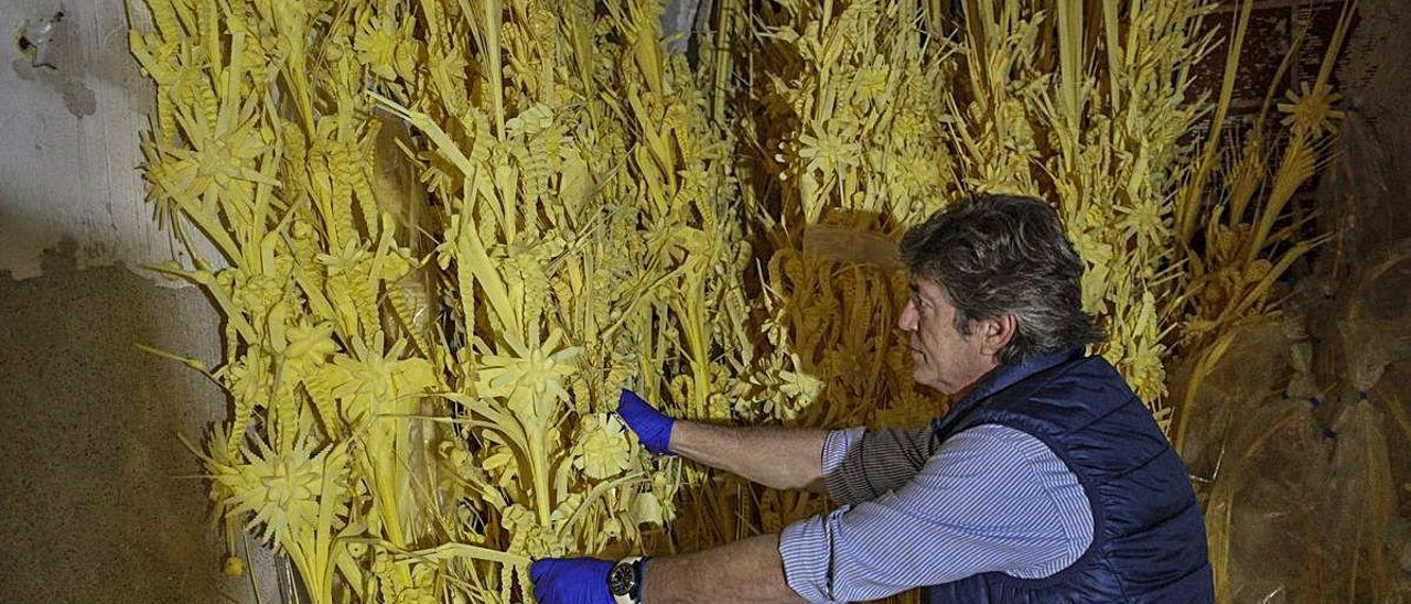 Uno de los productores de palma blanca, durante la última campaña.