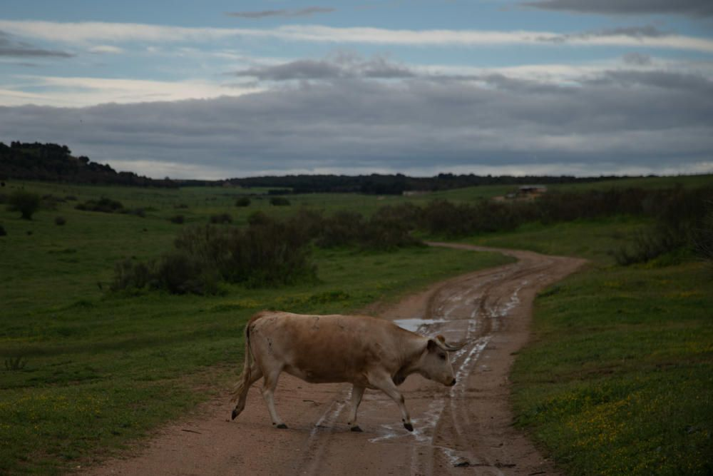 Los festejos taurinos corneados por la pandemia