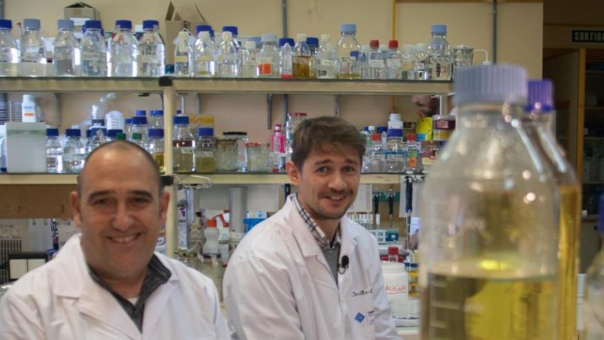 """La UIB detecta el """"gran potencial"""" de microbios marinos para degradar residuos plásticos"""