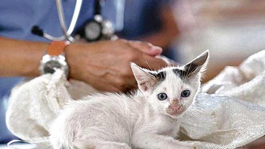 ¿Veterinarios amantes de los animales?