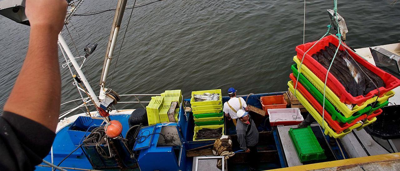 Descarga de merluza del pincho en el muelle pesquero de Avilés. | Ricardo Solís