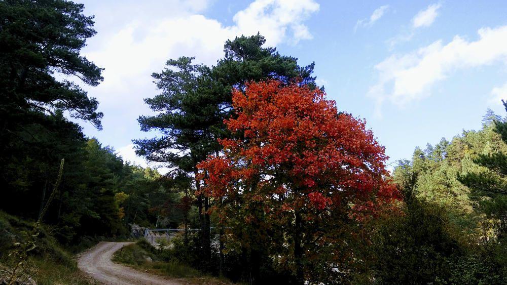 L'Espunyola. Un camí de travessa engalanat amb colors de tardor.