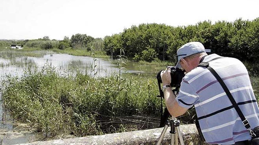 El cambio climático modifica los hábitos migratorios de las aves en los humedales