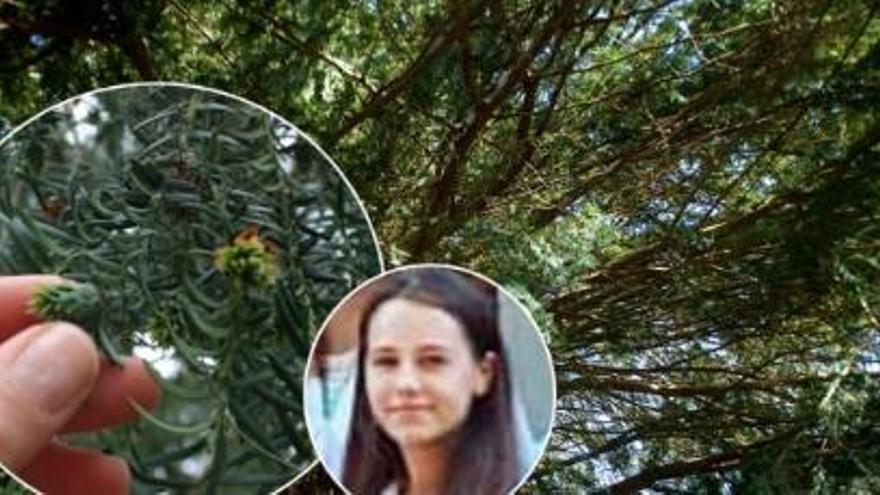 Una jove de 20 anys mor a Astúries intoxicada per una planta molt habitual