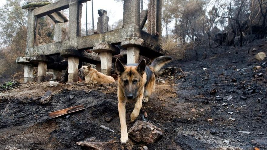 La ola de incendios en Galicia arrasó 49.000 hectáreas