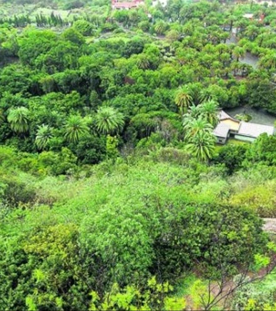 Los tesoros del Jardín Canario