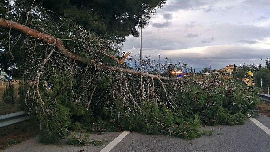 Més de 30 avisos a causa dels episodis de fort vent