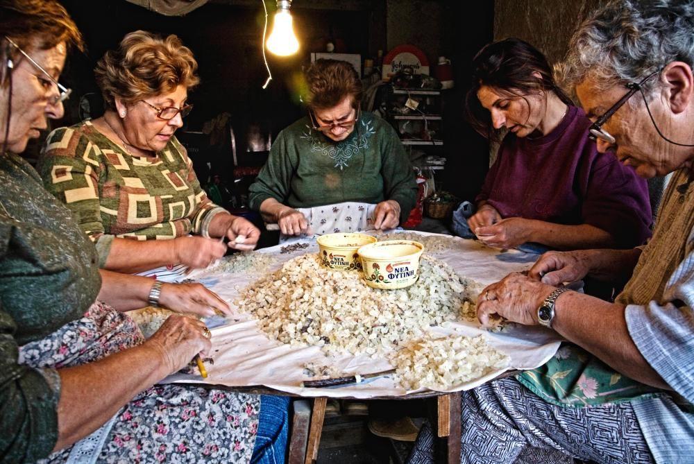 Grecia - Cultivo del mastique en la isla de Quios.