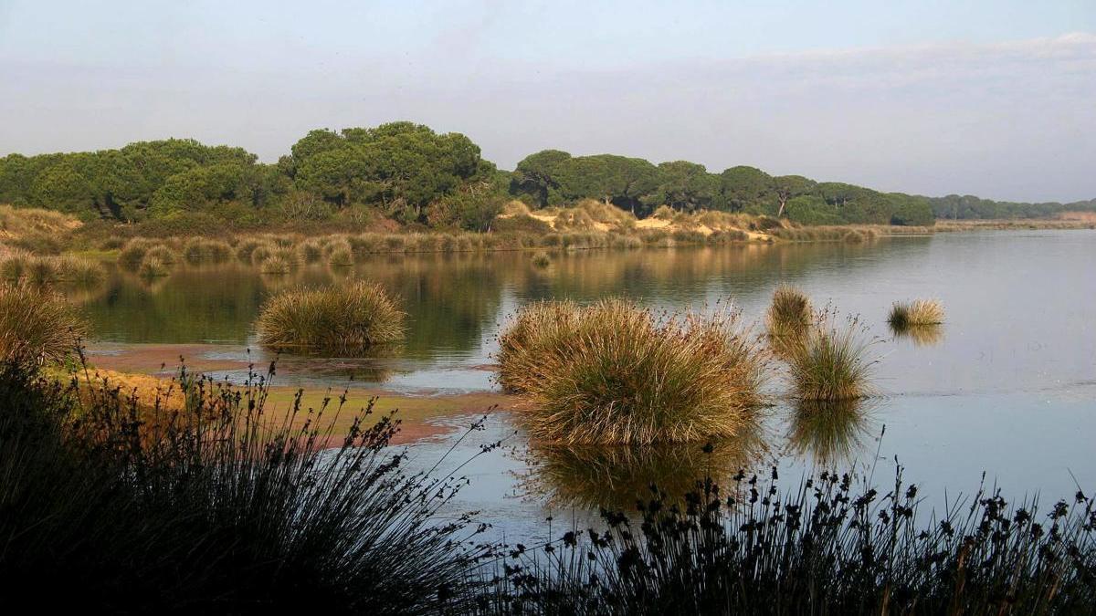 Una imagen de los humedales del espacio natural de Doñana.