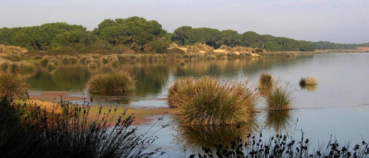 Una jurista de la UE dice que las extracciones excesivas de agua en Doñana son ilegales