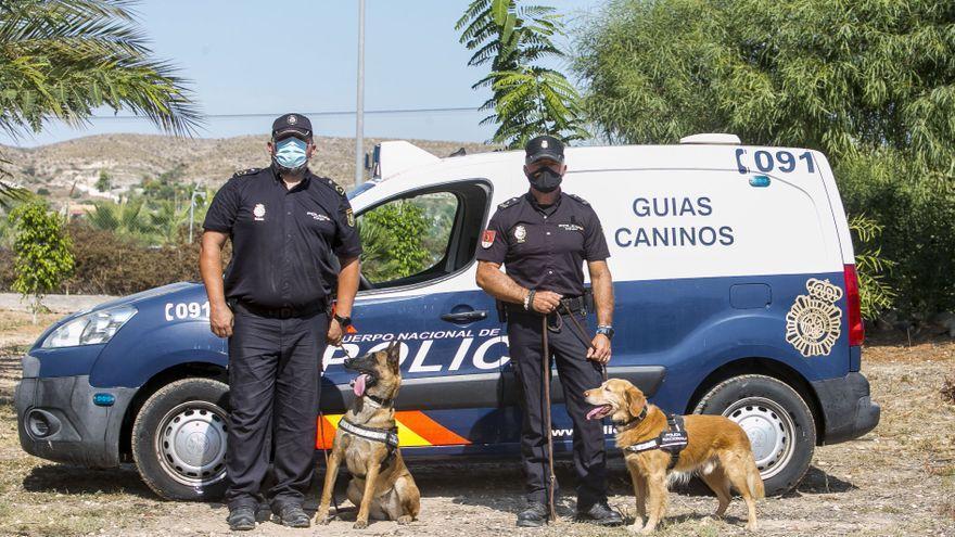 Dos perros llamados «Ginger» y «Yuko», agentes distinguidos