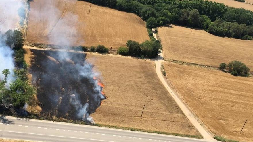 Un incendi destrossa 3.000 metres quadrats d'un camp de blat a tocar l'N-II a Orriols