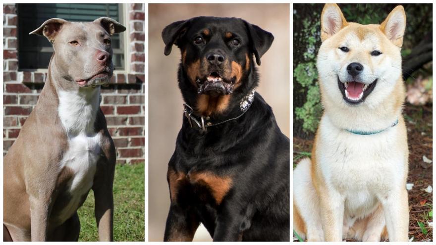 Més de 100.000 gossos podrien deixar de ser considerats perillosos
