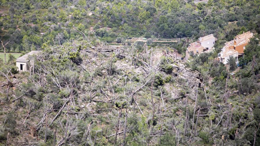 El Consell habilita 180.000 euros en ayudas a los afectados del 'cap de fibló' de la Serra