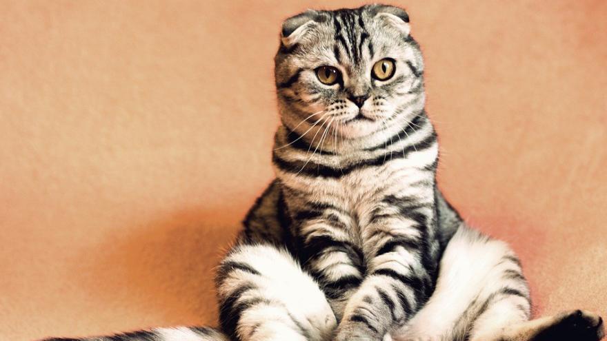 Las cinco leyendas urbanas sobre gatos más conocidas