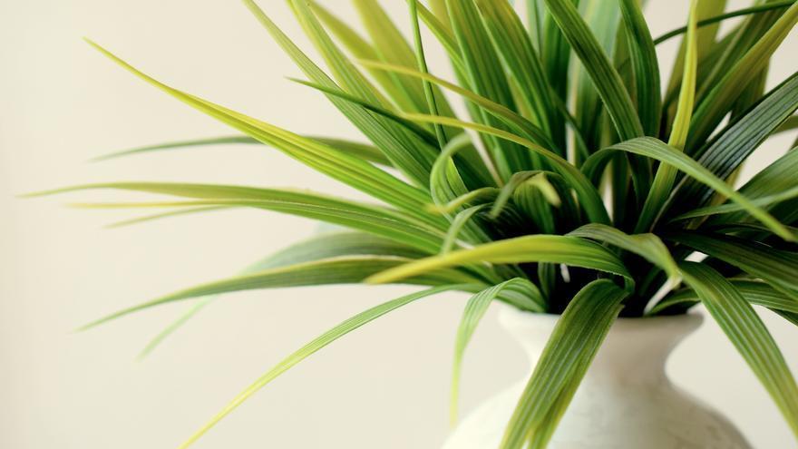 Las 5 plantas más resistentes para dar vida a tu balcón o terraza