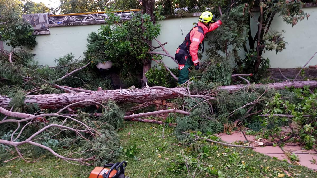 Un bombero, ayer, junto al árbol que cayó dentro de un chalet del paseo de la Cantera.