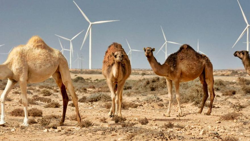 Rabat relanza al Sáhara como polo de inversión con un centenar de proyectos