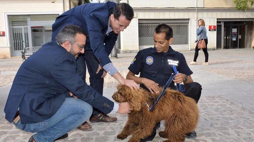Distinguen al Ayuntamiento de Elda por retirar del servicio al perro policía Suso
