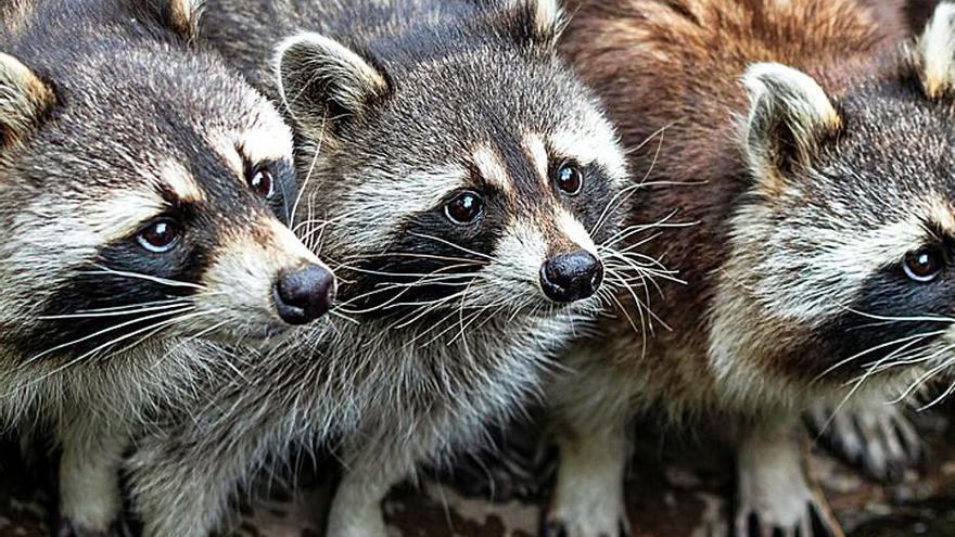 Doscientas especies invaden España: la guerra ha estallado