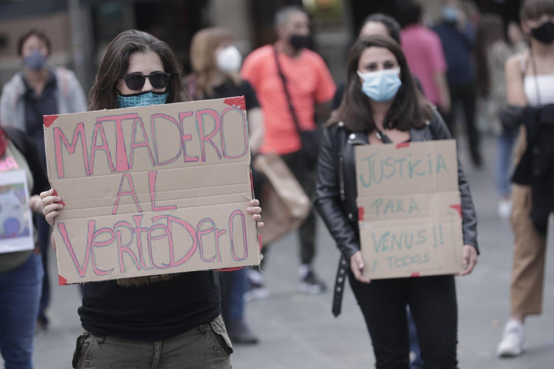 Manifestación en Palma por Venus, la perra pitbull que murió desangrada en Son Reus