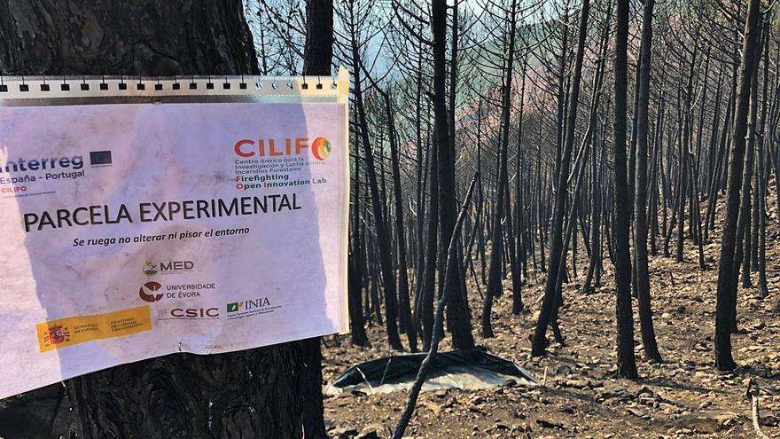 Científicos del CSIC analizan el suelo de Sierra Bermeja para mejorar su reforestación