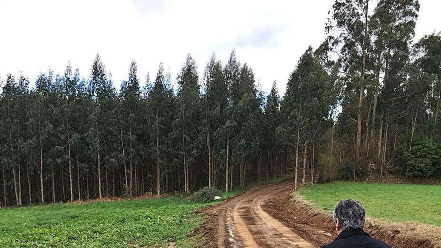 Oza-Cesuras tramita una ordenanza de talas con multas de hasta 3.000 euros por daños