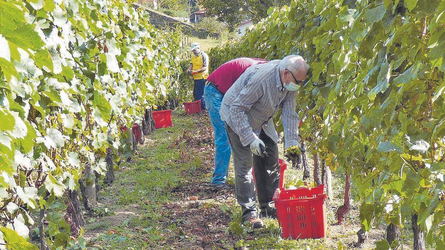 La copa medio llena del vino de Cangas