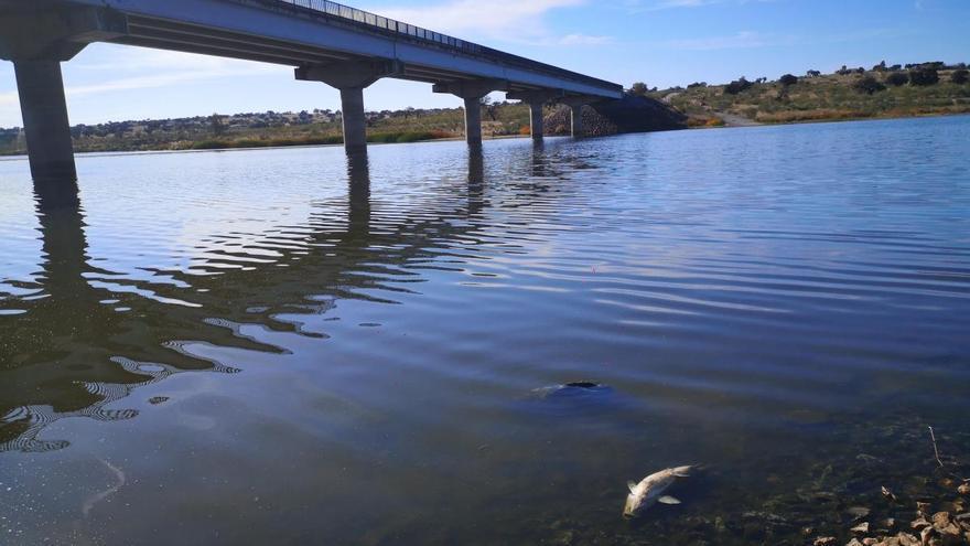 La Guardia Civil investiga la muerte de peces en el embalse de La Colada