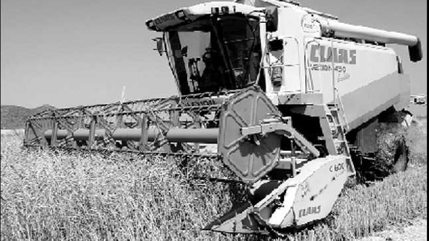 El arroz de Pego es uno de los más sanos de Europa por su bajo contenido en arsénico