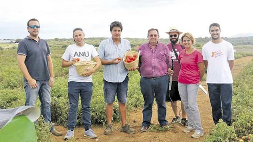 Expertos de la UIB estudian la adaptación de 5.000 tomateras al cambio climático