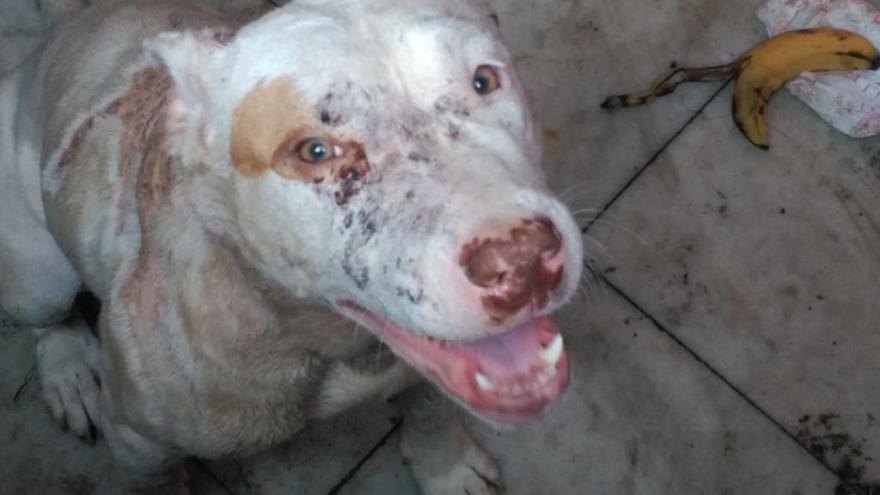 Perros desnutridos y con heridas en una casa okupa