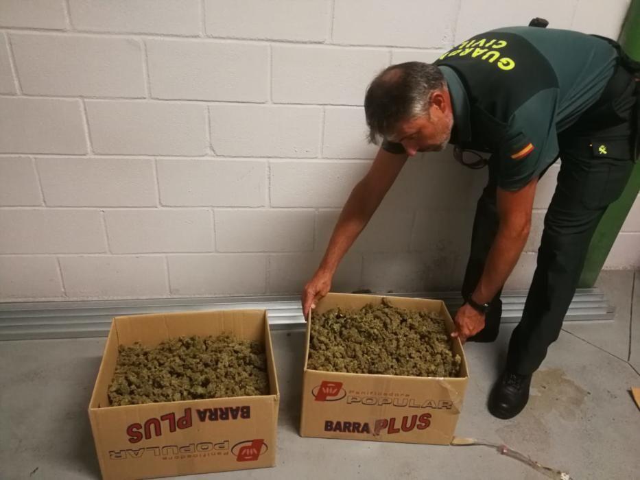 La mayor plantación de marihuana en Galicia
