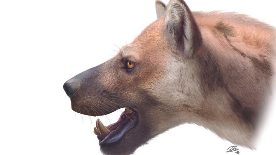 Identificada una nueva especie de carnívoro en el Cerro de los Batallones