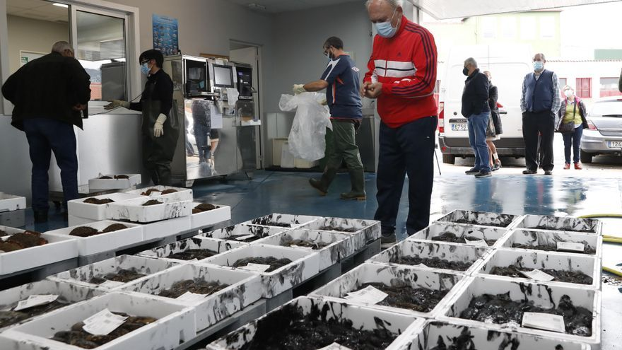 La cofradía de Redondela inicia la venta directa al consumidor de pescado y marisco