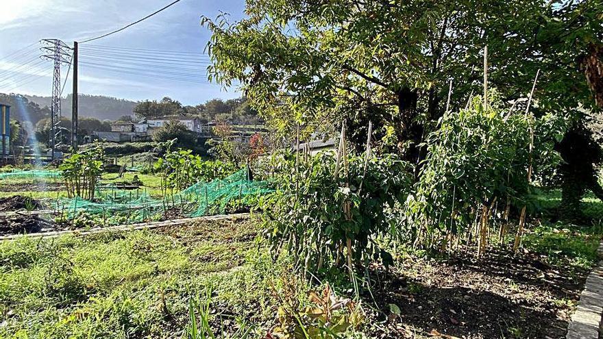 Las huertas urbanas del Sequelo serán cultivadas otros 3 años por los beneficiarios