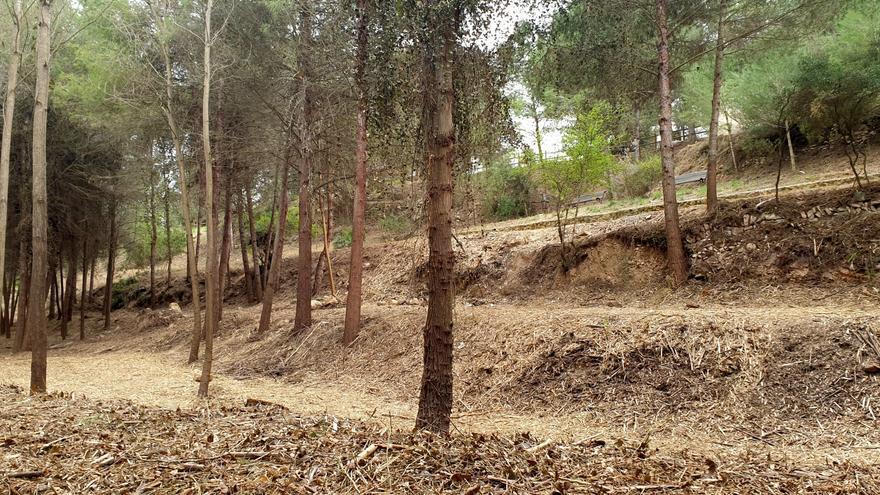 Cortafuegos verdes para proteger de los incendios forestales al Parc Natural y la Canyada